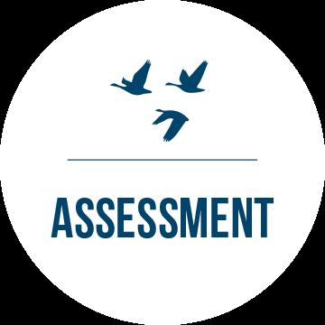 Assessment header with birds